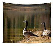 Canada Geese In Golden Sunlight Tapestry