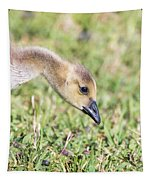 Canadian Gosling Tapestry