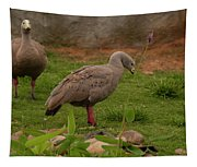 Cape Barren Geese Facing Right Tapestry