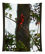 Cardinal In The Crepe Myrtle Tapestry