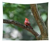 Cardinal In Tree Tapestry