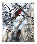 Cardinals In Mossy Tree Tapestry