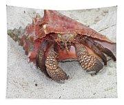 Caribbean Hermit Crab Tapestry