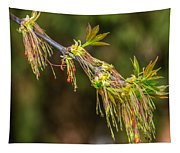 Catkin Time 5 Tapestry
