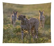 Cheetah Acinonyx Jubatus And Jackals Tapestry
