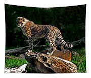 Cheetah Cub Finds Her Pride Rock Tapestry