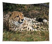 Cheetah Portrait Tapestry