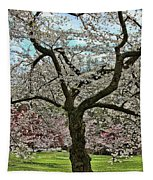 Cherry Blossom Trees Of Branch Brook Park 31 Tapestry