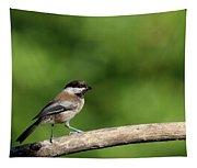 Chickadee . 40d8031 Tapestry