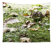 Chipmunk Getting Ready For Winter Tapestry