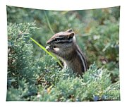 Chipmunk With Bokeh Tapestry