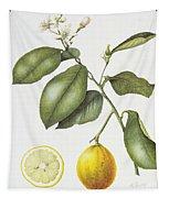 Citrus Bergamot Tapestry