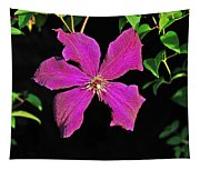 Clematis 2598 Tapestry