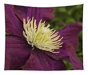 Clematis 4000 Tapestry