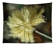 Clematis Seed Head 1 Tapestry