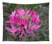 Cleome Spinosa  Tapestry