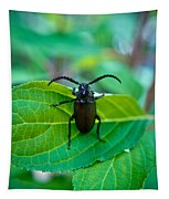 Climbing Beetle Tapestry