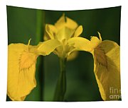 Close Up Of A Yellow Bearded Iris Tapestry