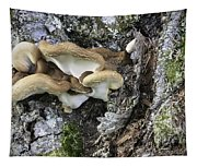 Cluster Of Fungi Tapestry