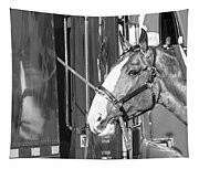 Clydesdale Shine Tapestry
