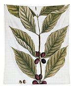 Coffee Plant, 1735 Tapestry