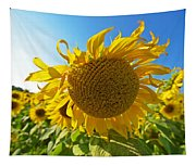 Colby Farms Sunflower Field Newbury Ma Ball Of Fire Tapestry