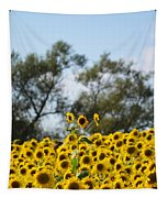 Colby Farms Sunflower Field Newbury Ma Standing Tall Tapestry