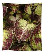 Coleus Plant Tapestry