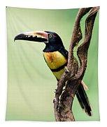 Collared Aracari Pteroglossus Tapestry