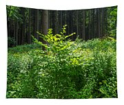 Colors Of A Forest In Vogelsberg Tapestry