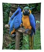 Colourful Macaw Pohakumoa Maui Hawaii Tapestry