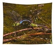 Come Along With Me Dragonflies Tapestry