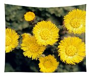 Common Coltsfoot  Tapestry