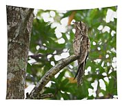 Common Potoo Costa Rica Tapestry