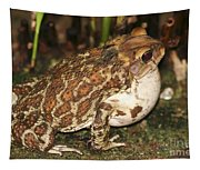 Common Toad Tapestry