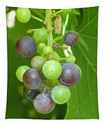 Concord Grapes On The Vine Tapestry