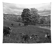 Congregating Cows. Jenne Farm Cow Reading Vermont Black And White Tapestry