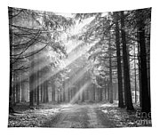 Conifer Forest In Fog Tapestry