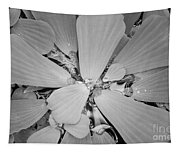 Conservatory Nature In Black And White 1 Tapestry