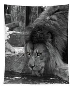 Cool Drink Of Water  Black And White  T O C Tapestry