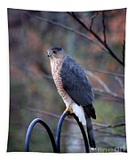 Coopers Hawk In Autumn Tapestry