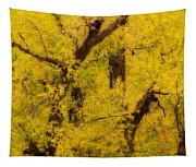 Cottonwood Fall Foliage Colors Abstract Tapestry
