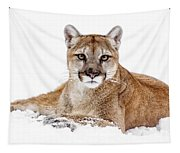 Cougar On White Tapestry
