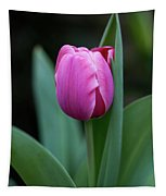 Cradled Pink Tulip Tapestry