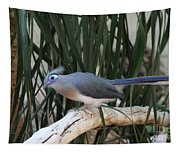 Crested Coua Tapestry