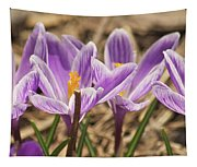 Crocuses 2 Tapestry