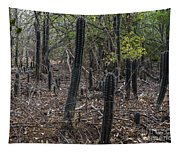 Curacao - Blooming Cacti In The Forest Tapestry