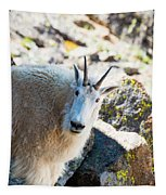 Curious Goat On The Mount Massive Summit Tapestry