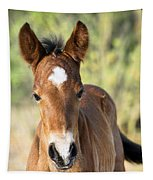 Curious Little Colt  Tapestry