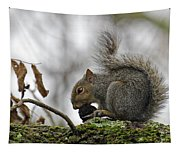 Curled Tail Tapestry